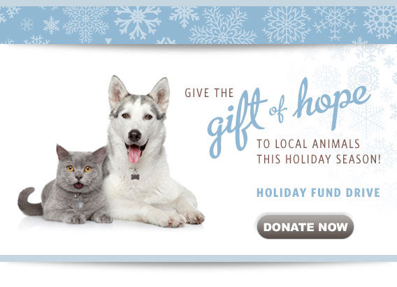 Support the ASPCA: A Holiday W...