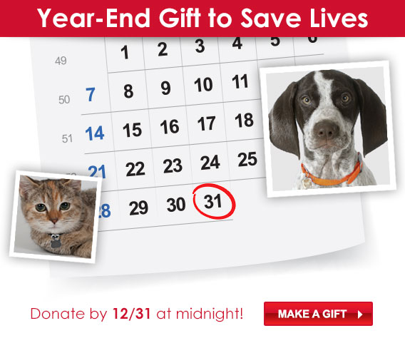 Save a Life Before the Year En...