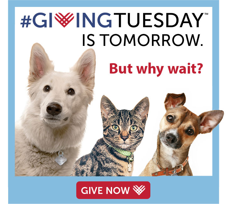 Giving Tuesday is tomorrow. But why wait? Give Now.