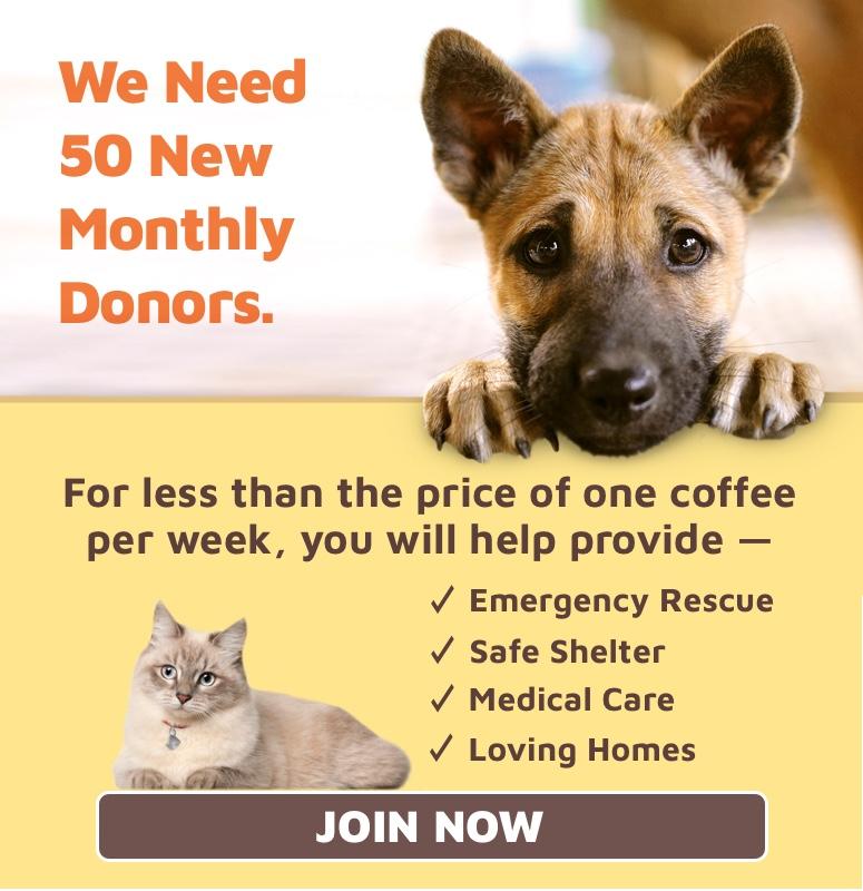 Adopt a Pet - Pet Adoption Centers - Michigan Humane Society