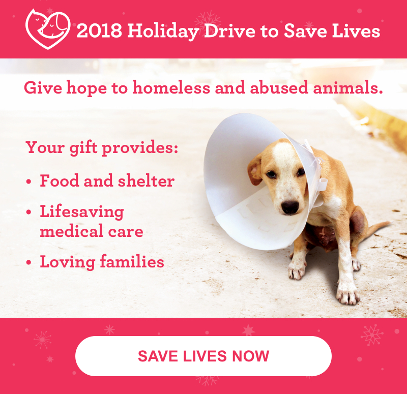 Adoption Procedures - New Orleans, LA - Louisiana SPCA