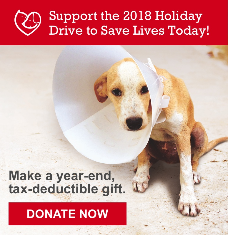 canine comfort pet therapy | valley humane society | pleasanton ...