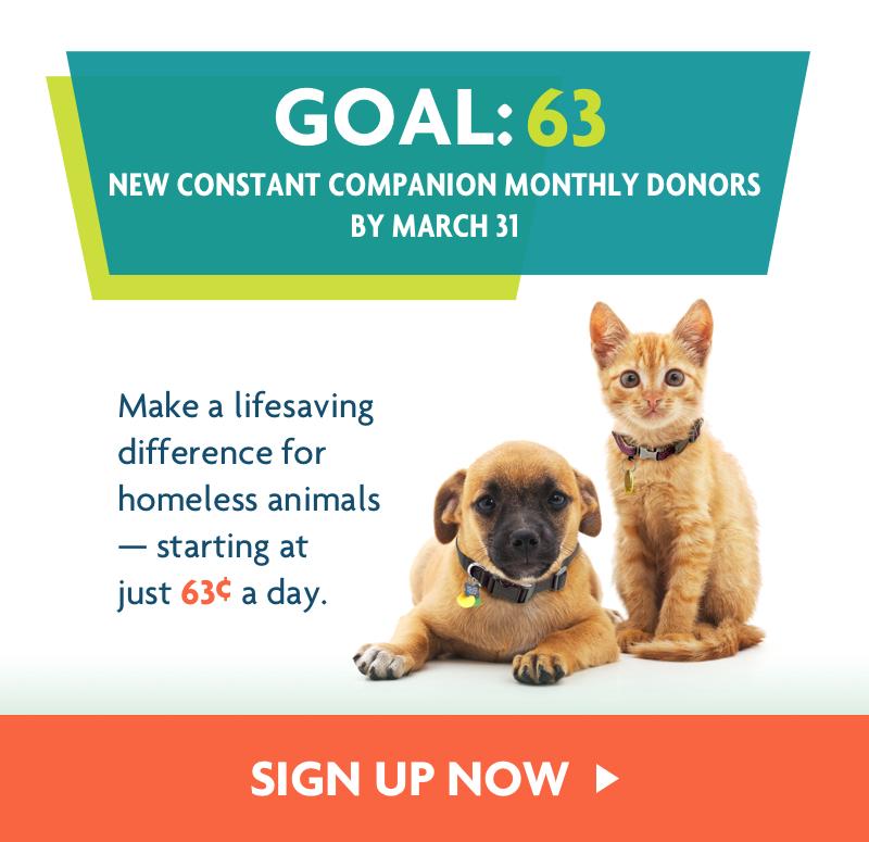 Animal Shelters Adopt A Pet Michigan Humane Society